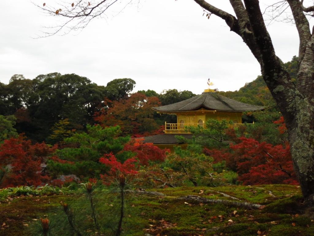 Автор: Norio.NAKAYAMA. Фото:  www.flickr.com