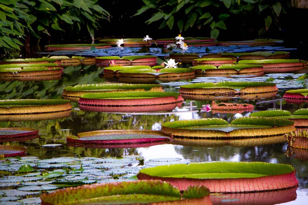 Автор: T.JEFFREY. Фото:  www.flickr.com