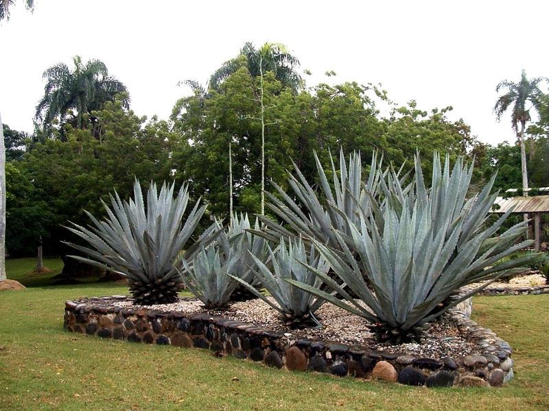 Национальный ботанический сад Доминиканы. Фото:  miroland.com