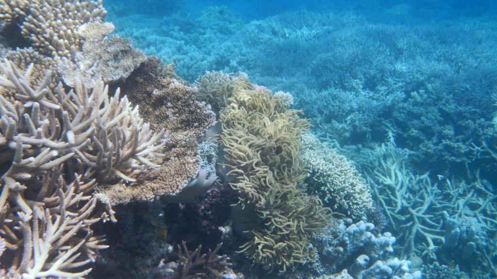 Agincourt Reef. Автор: Robert Linsdell. Фото:  www.flickr.com