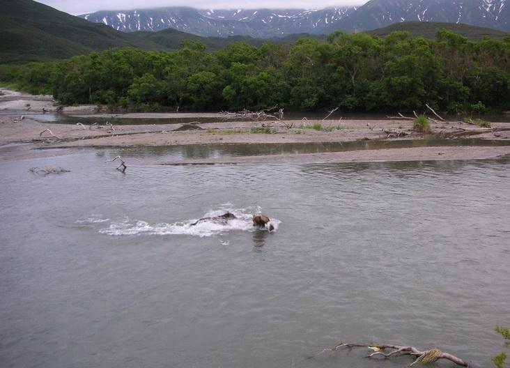 Фото: Елена Шарова  http://www.guidekamchatka.ru