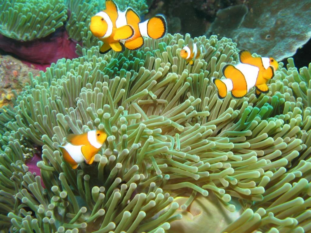 Автор: Taso Viglas. Фото:  www.flickr.com
