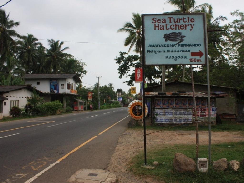 Указатель на черепашью ферму. Фото:  shrilankablog.ru