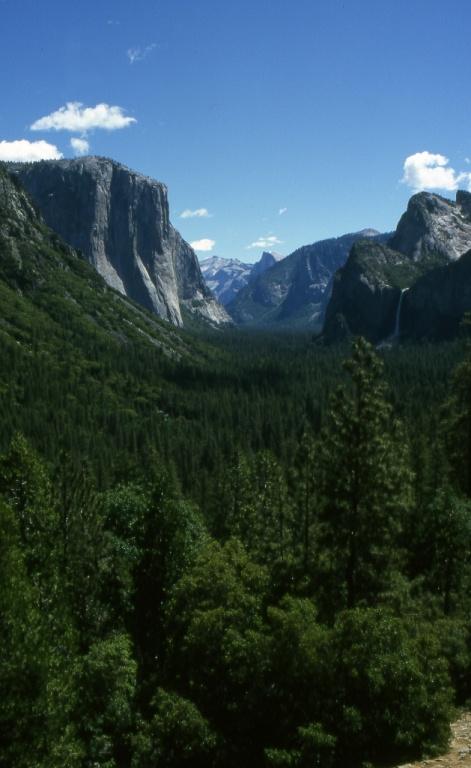 Лесные массивы Калифорнии.Фото с сайта tonkosti.ru