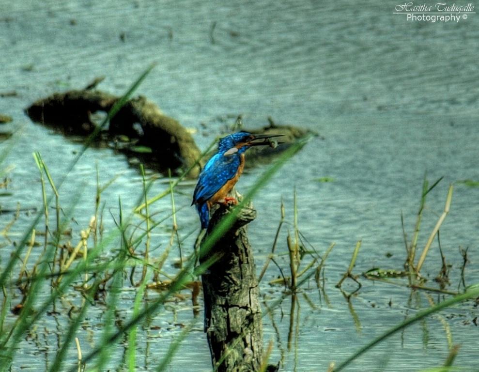 Автор: Hasitha Tudugalle. Фото:  www.flickr.com