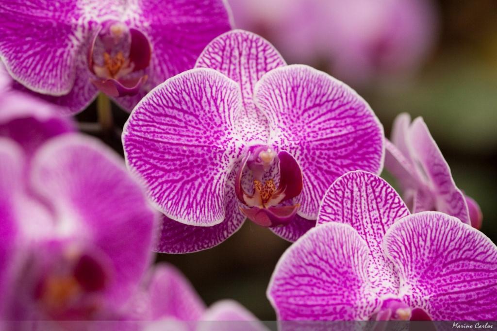 Автор: MarinoCarlos. Фото:  www.flickr.com