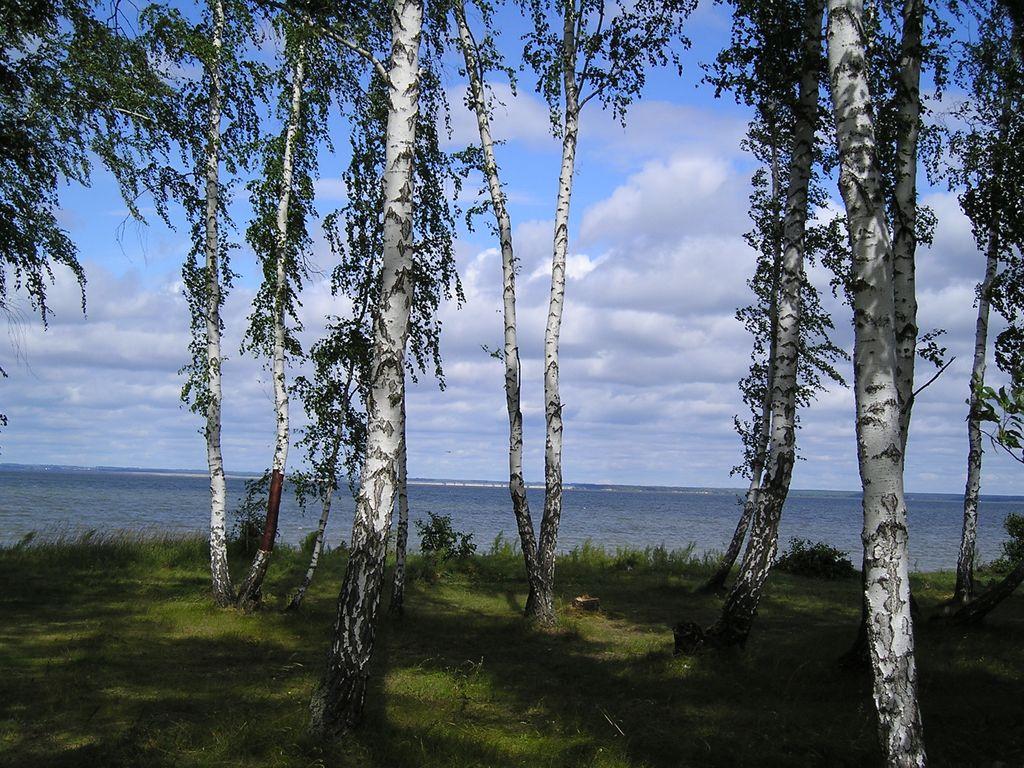 Фото с сайта www.sbras.nsc.ru