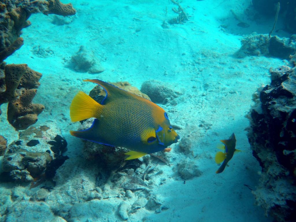 Подводный мир. Автор: cdorobek. Фото:  www.flickr.com