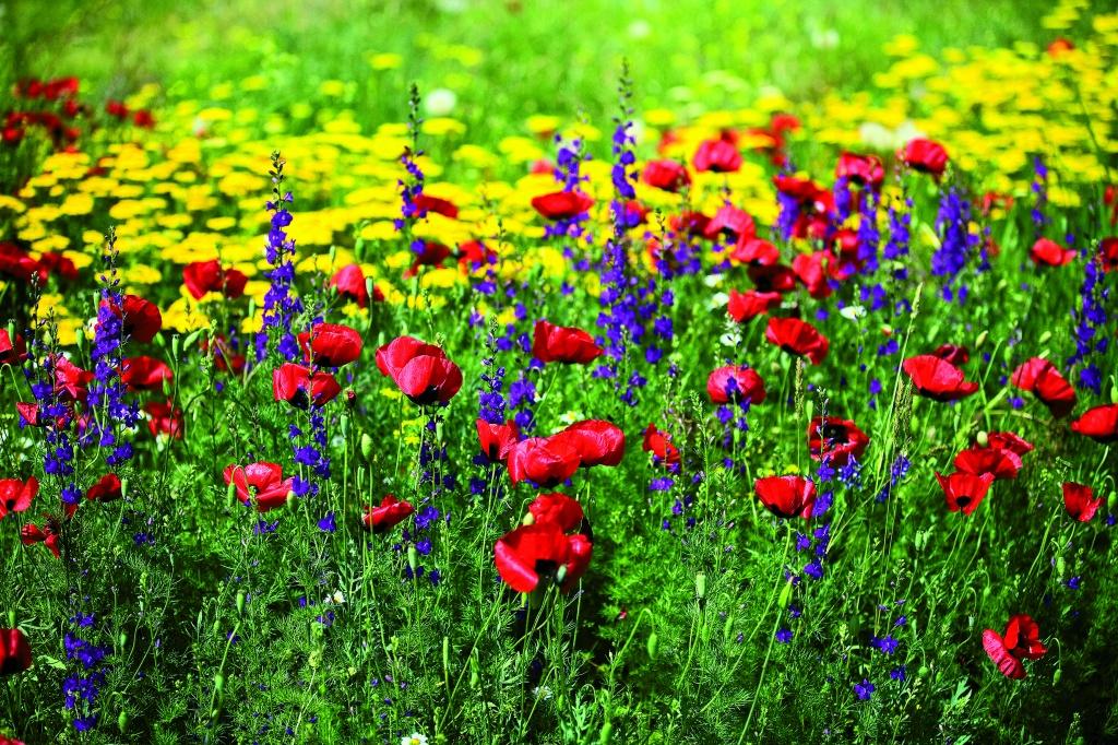 Автор: ArArAt Brandy. Фото:  www.flickr.com