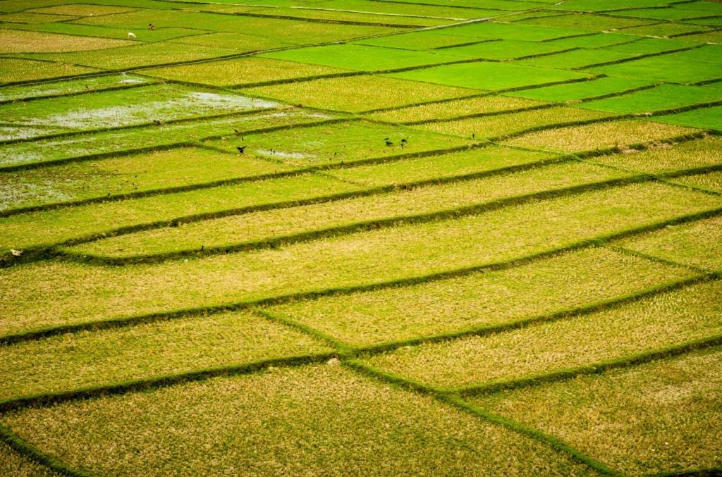 Автор: Rakib Hasan Sumon. Фото:  www.flickr.com