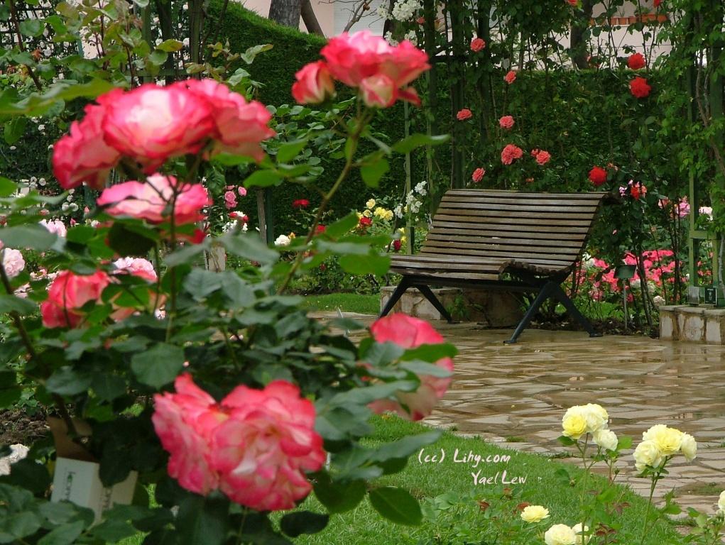 Автор:  Yael Lew. Фото:  www.flickr.com