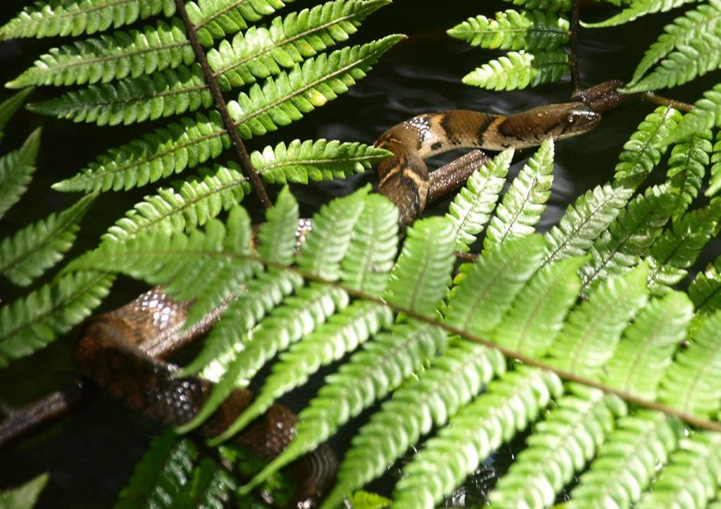 Автор: dheymaal. Фото:  www.flickr.com