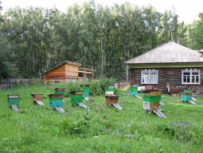 Фото: www.katunskiy.ru