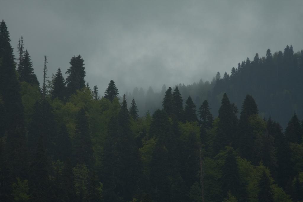 Автор: Vyacheslav Fomichev. Фото:  www.flickr.com