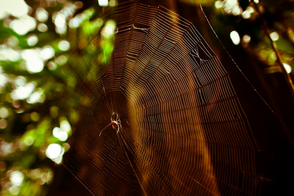 Автор: Eric Montfort. Фото:  www.flickr.com