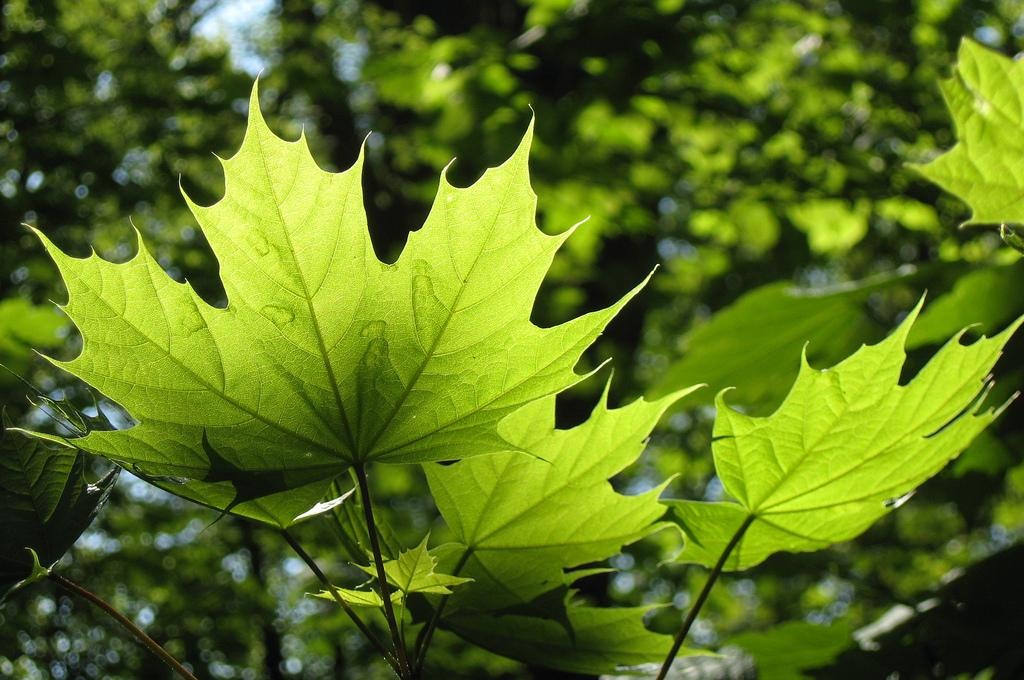 Автор: Colliefan. Фото:  www.flickr.com