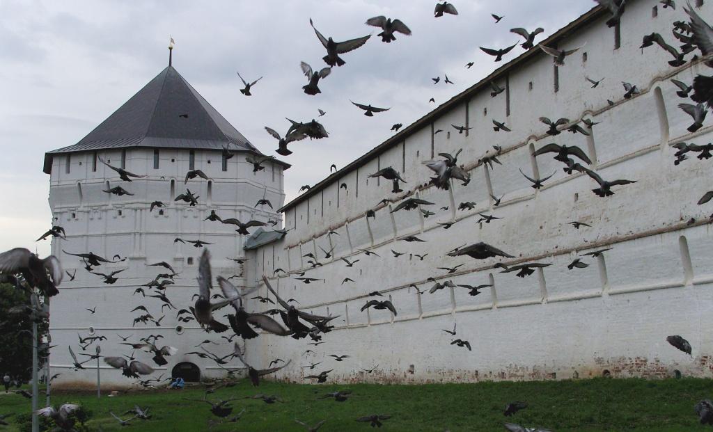 Автор: nox-AM-ruit. Фото:  www.flickr.com