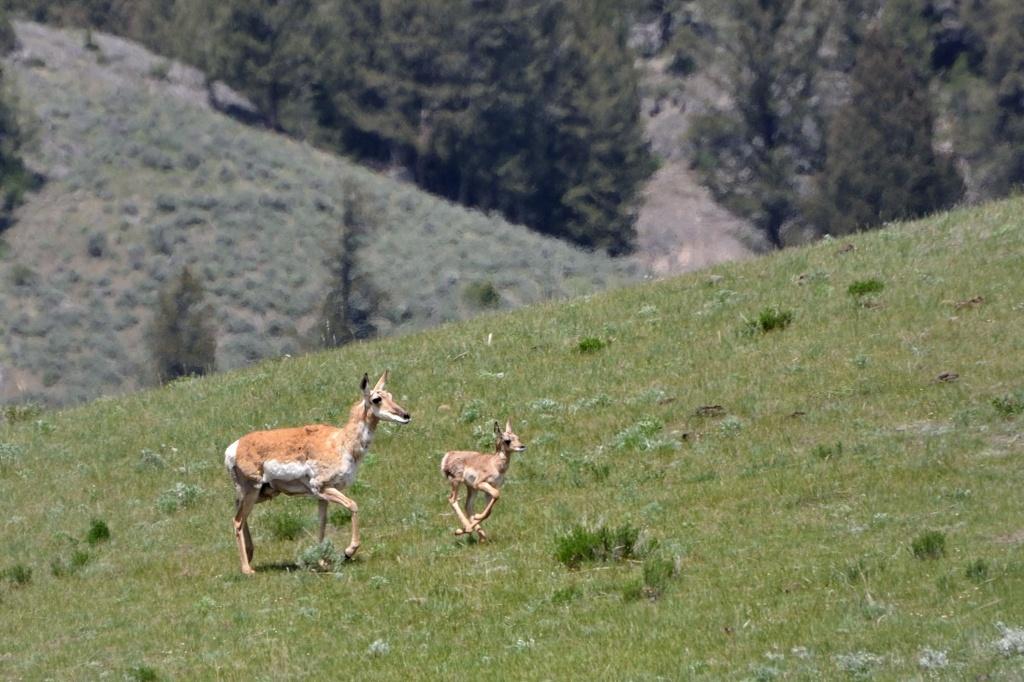 Автор: donjd2. Фото:  www.flickr.com