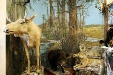 Музей «Археология, этнография и экология Сибири»