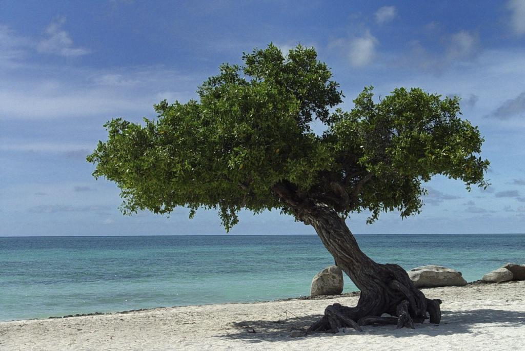 Пляжи Арубы. Автор: Serge Melki. Фото:  www.flickr.com