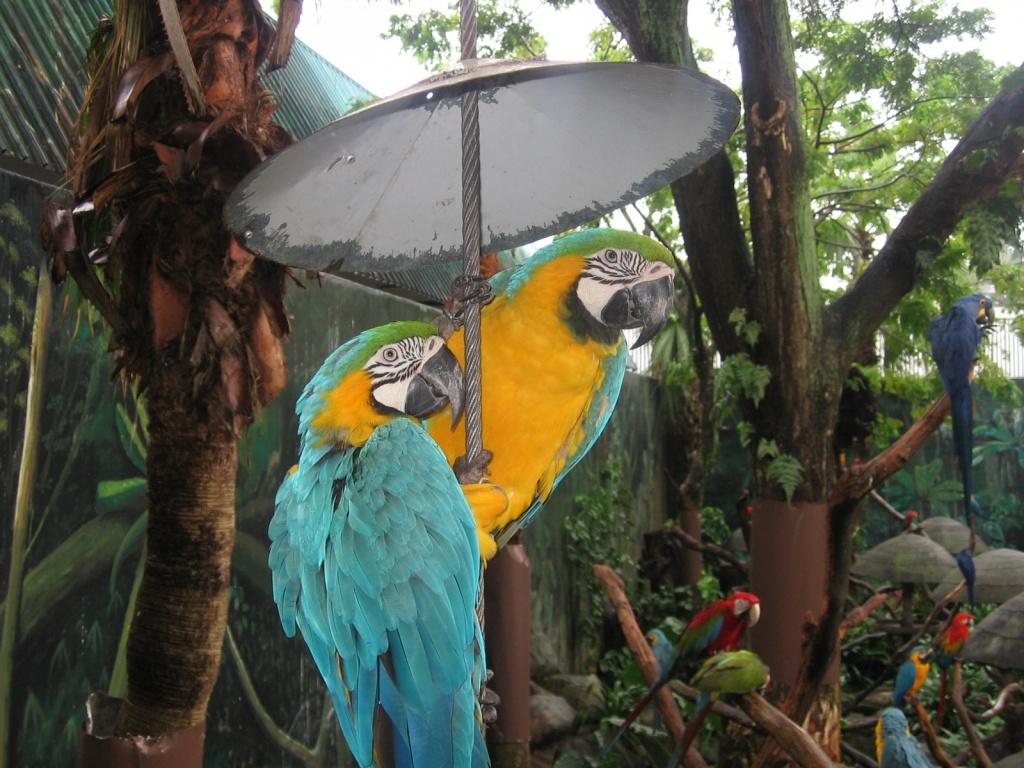 Автор: Gopal Venkatesan. Фото:  www.flickr.com