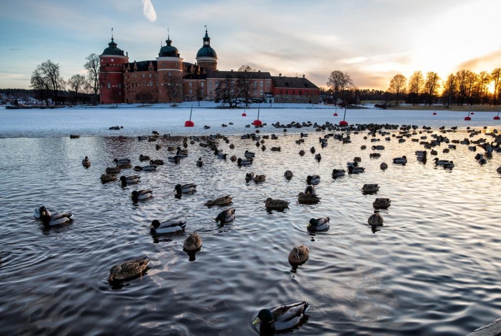Автор: Ulf Bodin. Фото:  www.flickr.com
