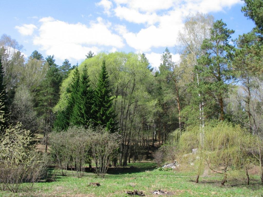 Ботанический сад. Автор: DmitrySA. Фото:  commons.wikimedia.org
