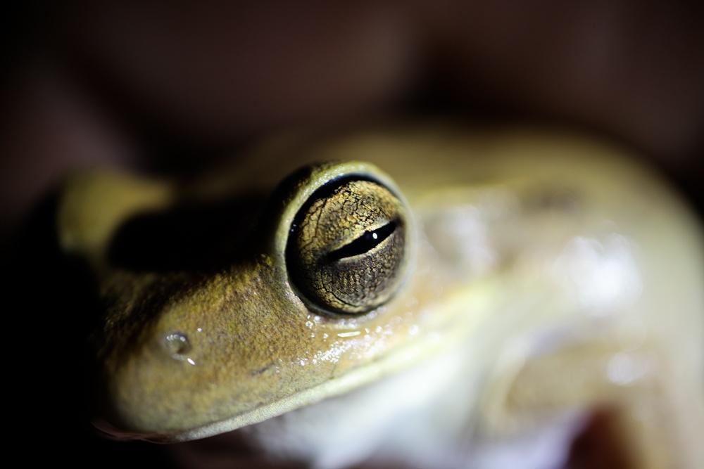 Автор: Nori Almeida. Фото:  www.flickr.com