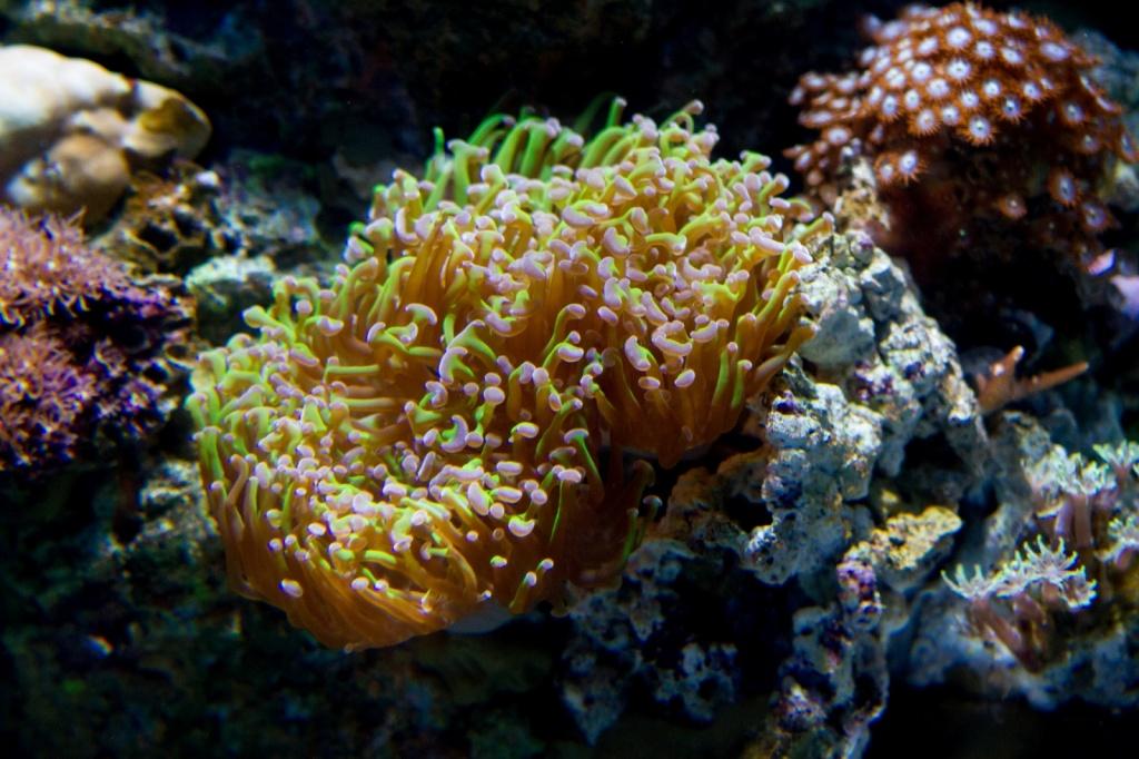Автор: beggs. Фото:  www.flickr.com