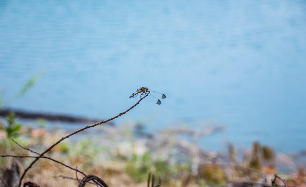 Автор: mratg.  Фото:  www.flickr.com