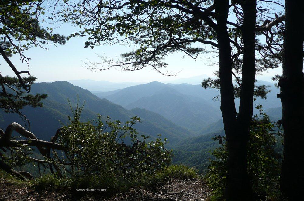 Фото с сайта  www.dikarem.net