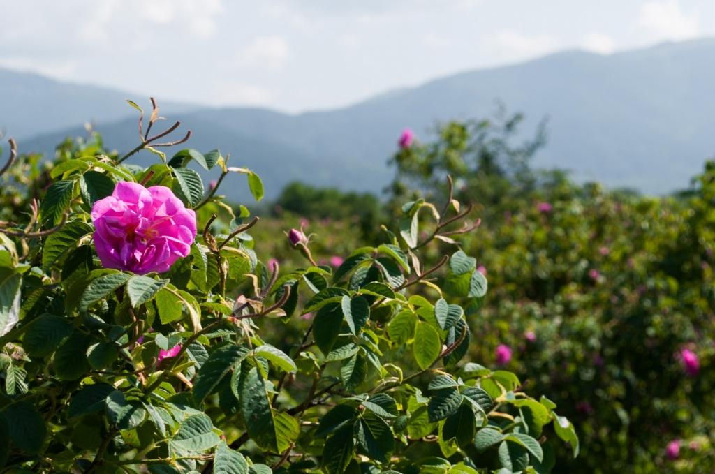 Автор: valix. Фото:  www.flickr.com