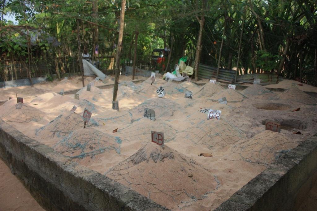 Бассейн с яйцами черепах. Фото:  shrilankablog.ru