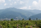 Долина Роз