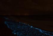 Море Звезд