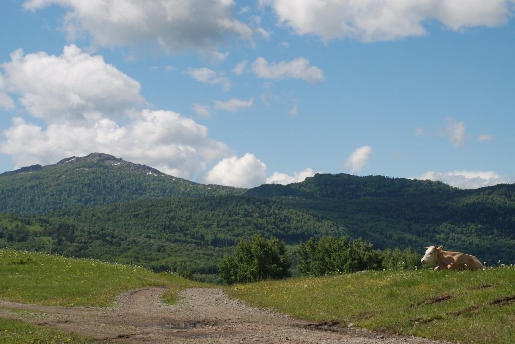 Гора Синюха (1206 м), самая высокая гора Колыванского хребта северо-западной части Алтайских гор. Синюха и её прилегающие земли имеют статус памятника природы.