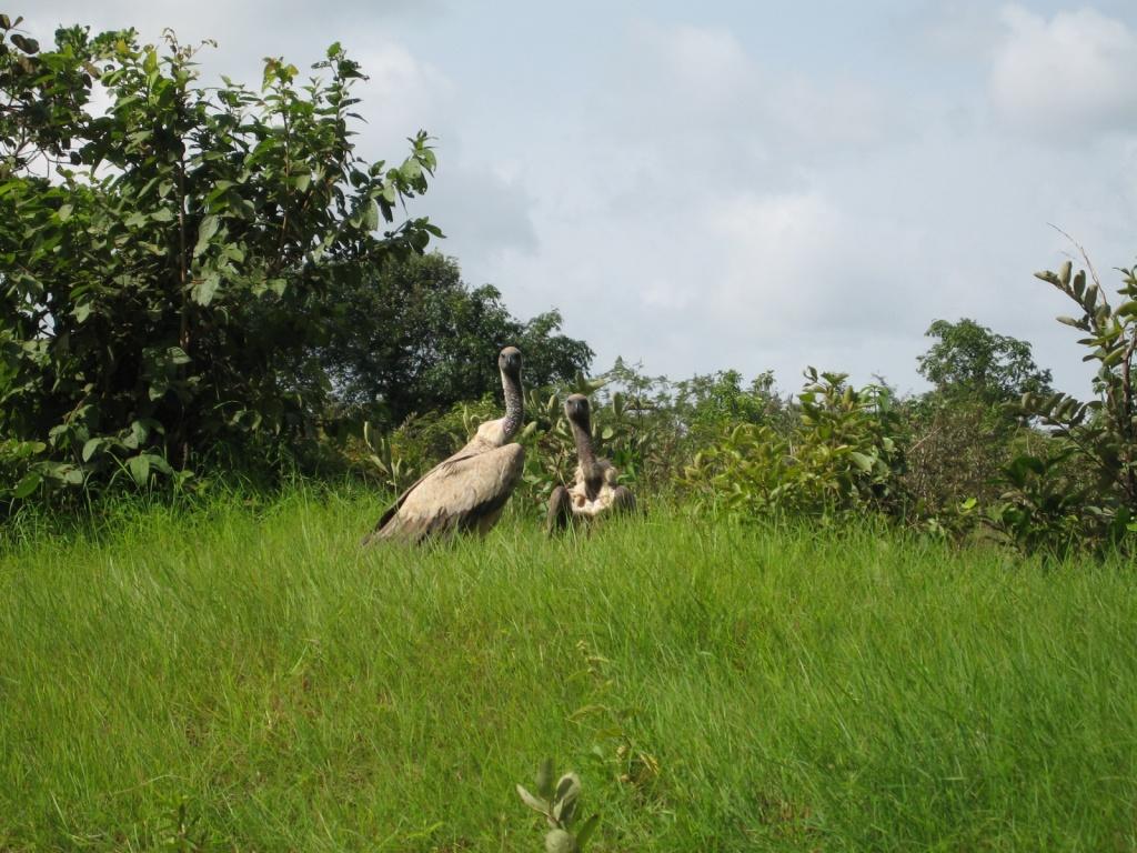 Гвинея. Автор: 300td.org. Фото:  www.flickr.com