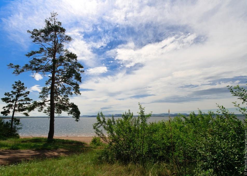 «Молодые» сосны у берега. Фото: Сергей Филинин