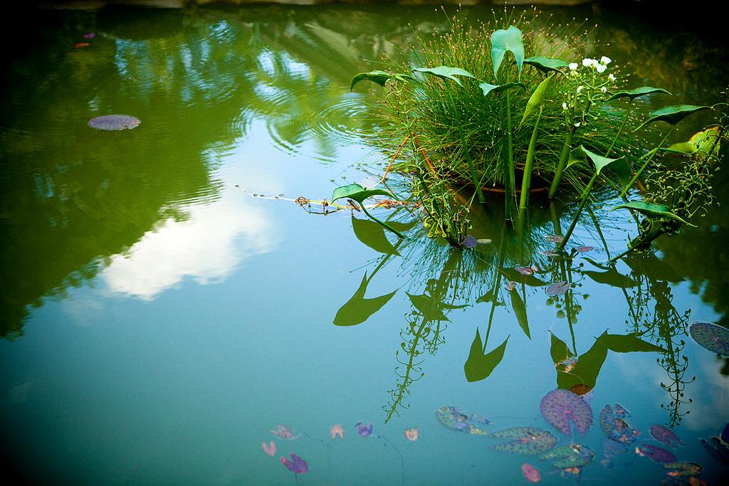 Автор: Mel Toledo. Фото:  www.flickr.com
