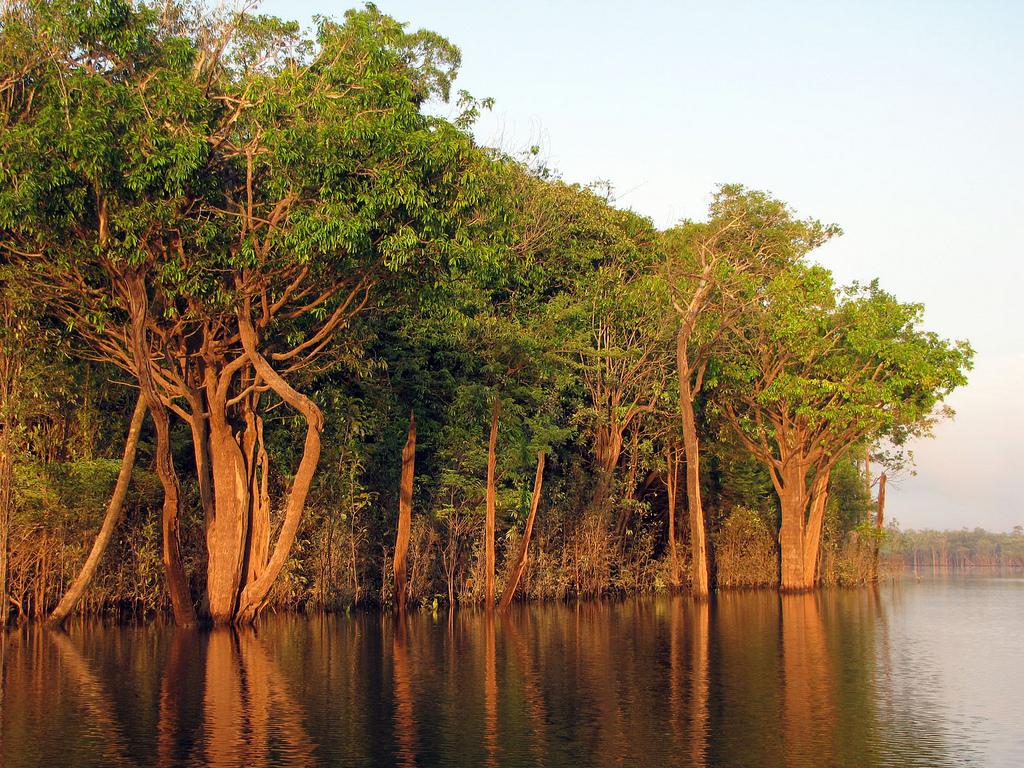 Автор: treegrow. Фото:  www.flickr.com