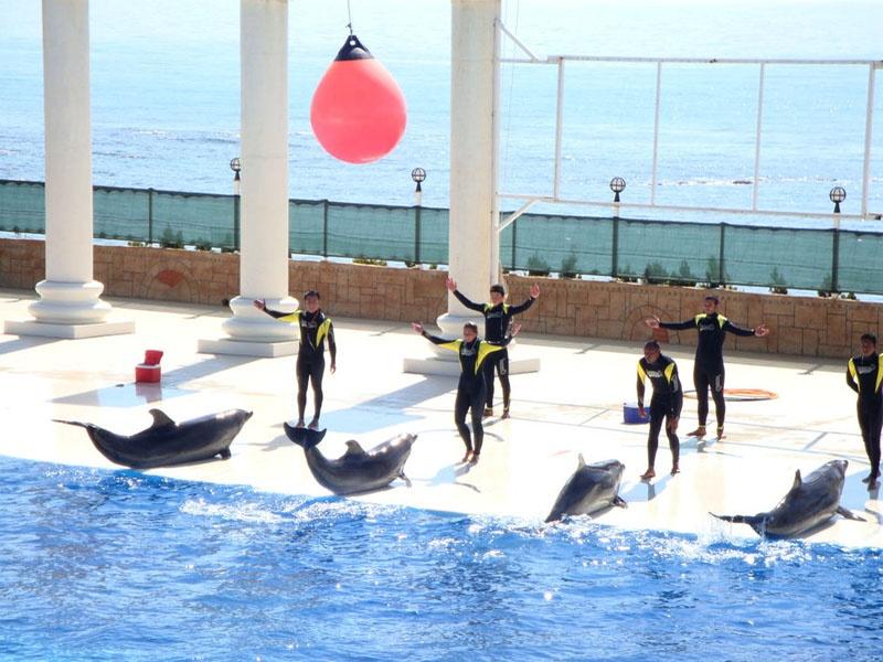Дельфинарий. Фото:   miroland.com