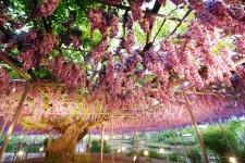 Парк Асикага