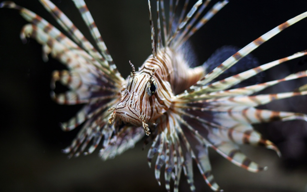 Фото:  www.planeta-neptun.ru