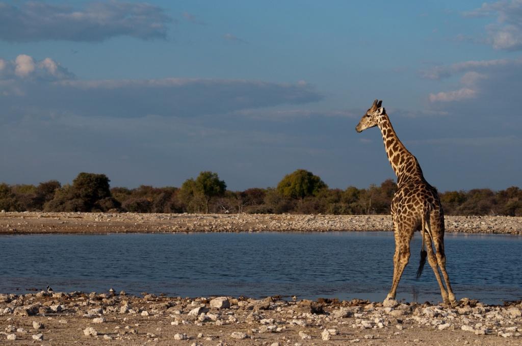 Намибия. Автор: yannboix. Фото:  www.flickr.com