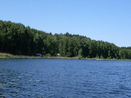 Озеро и бор. www.linevo-ozero.ru
