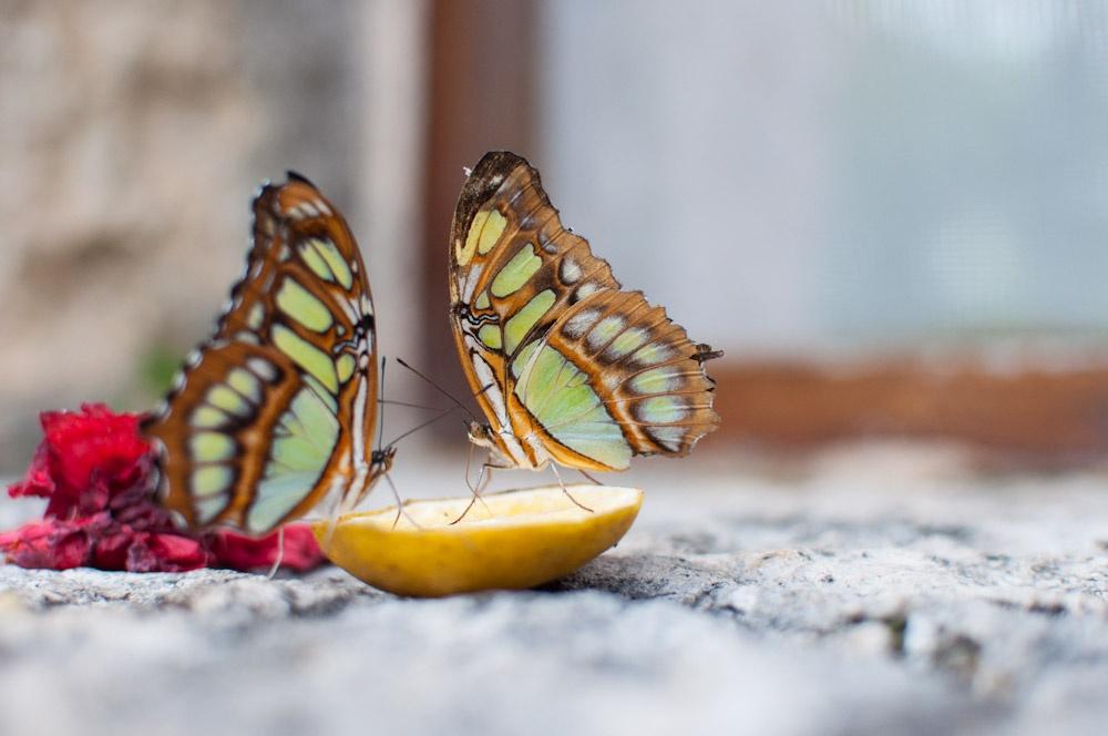 Автор: Jesus Perez Pacheco. Фото:  www.flickr.com