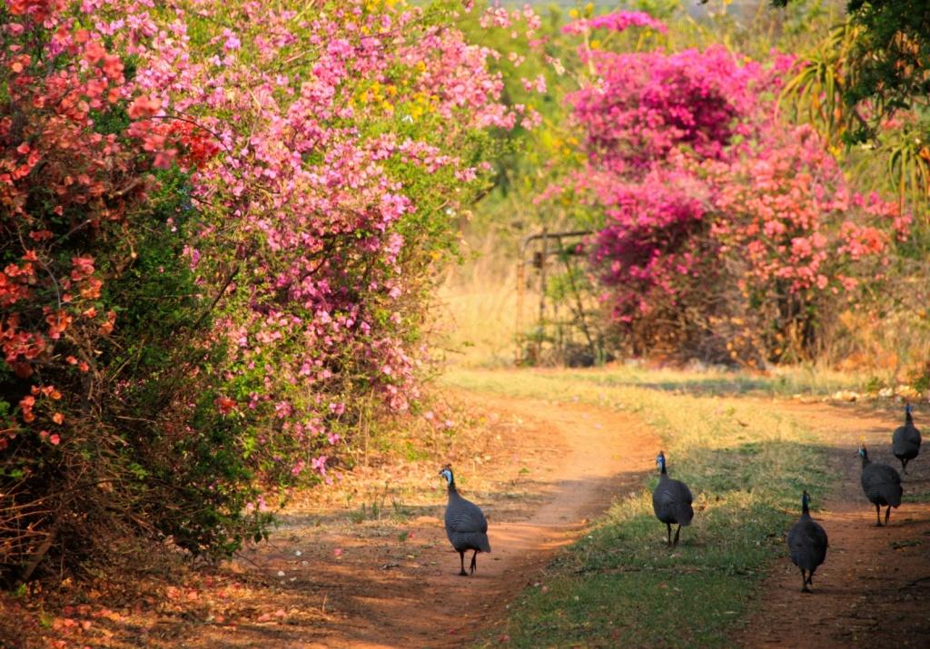 Гвинея. Автор: martie1swart. Фото:  www.flickr.com