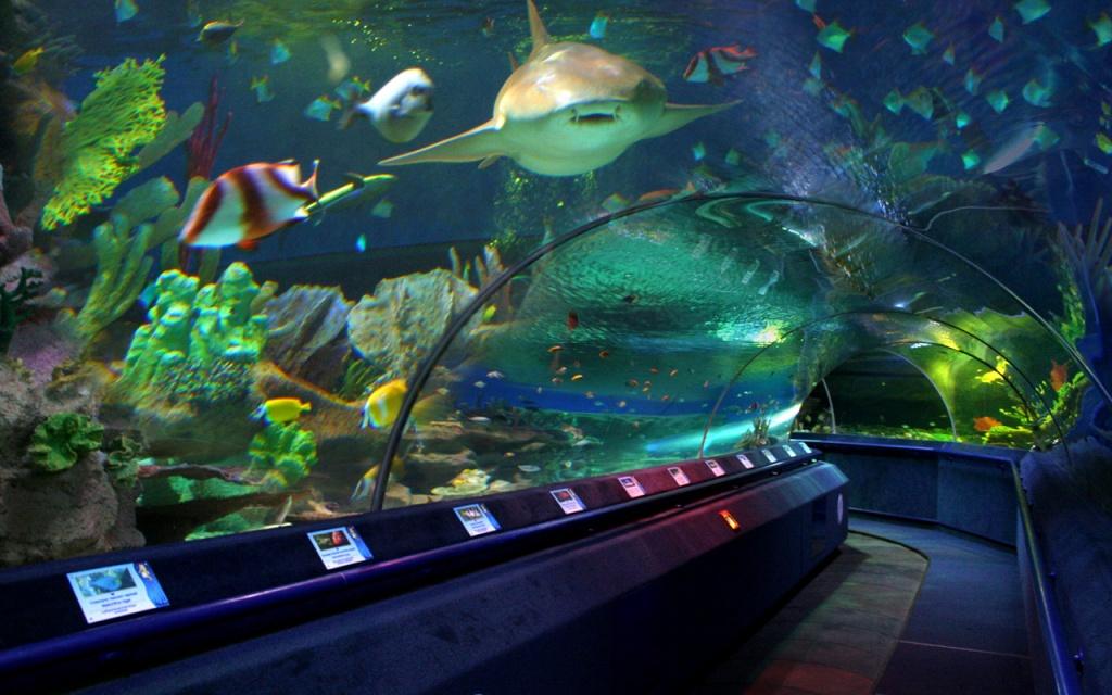 Главный аквариум. Фото:  www.planeta-neptun.ru