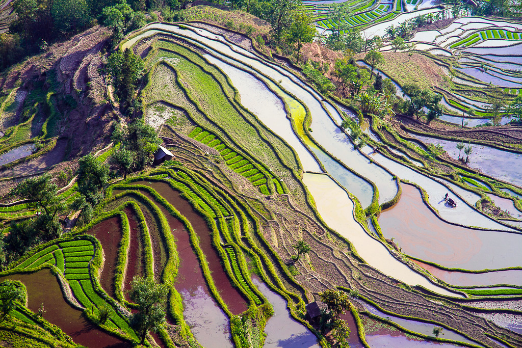 Рисовые поля в Юань. Автор: Hoang Giang Hai. Фото:  www.flickr.com