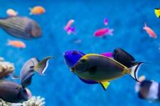 Океанариум «Подводный мир Сингапура»